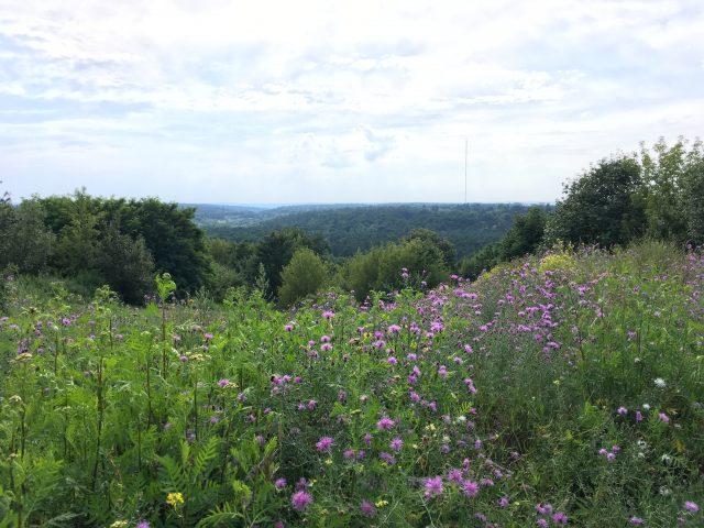 Pflanzenführung am Teufelsberg